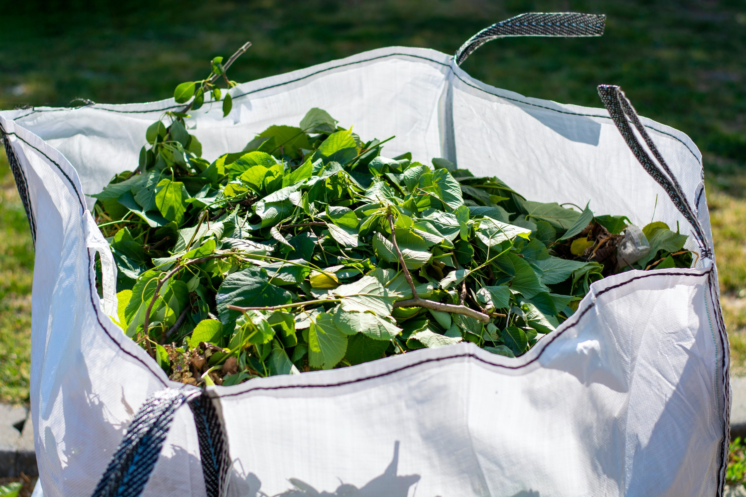 A white bag filled with leaves and branches.